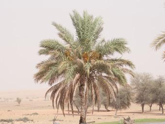 Dubai Desert Conservation Resort